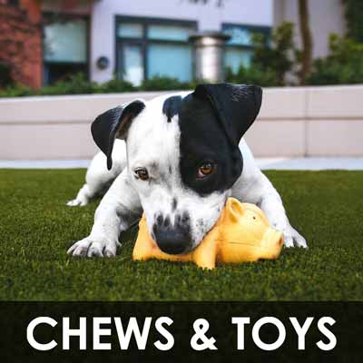 dog toys and chew toys