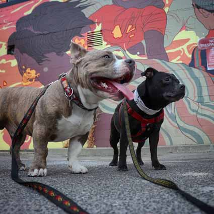 ruby and chester in front of mural